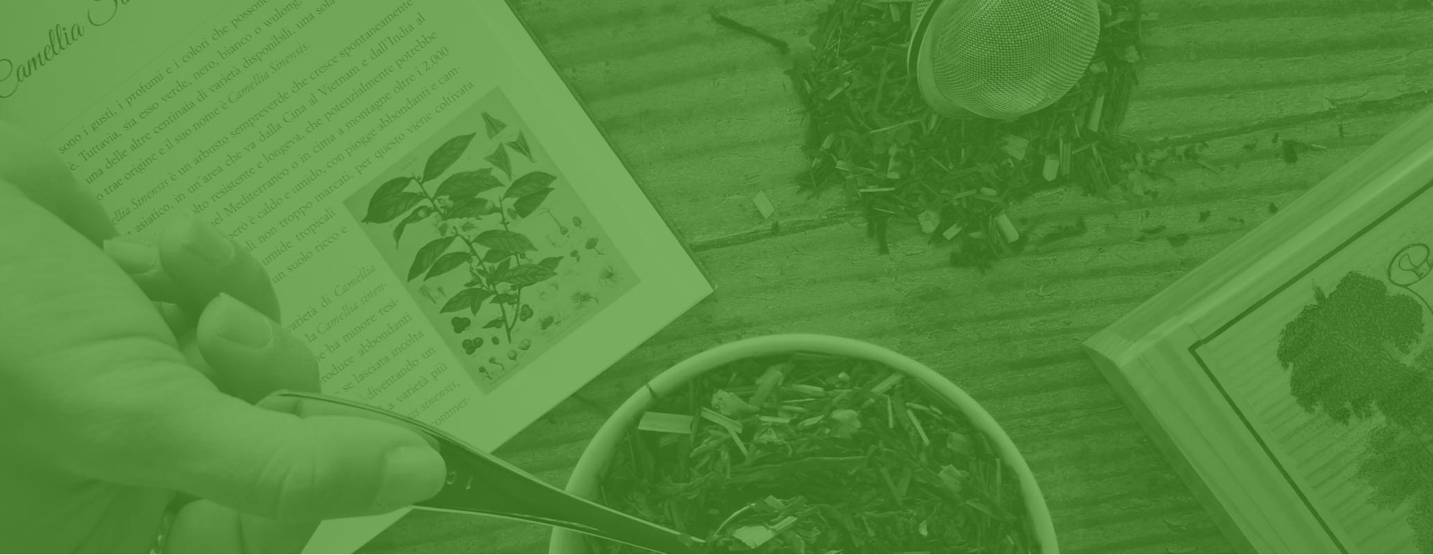 tè classici - infusi - infusi personalizzati